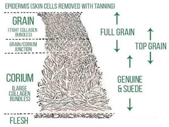 jenis kulit berdasarkan struktur