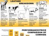 gambar infografis perbedaan bahan jaket kulit sapi dan domba